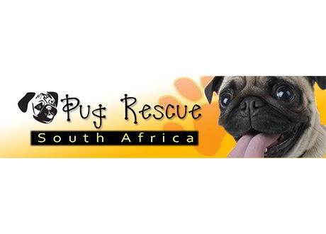 pug-rescue-south-africa